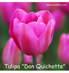 don_quichotte__tekst